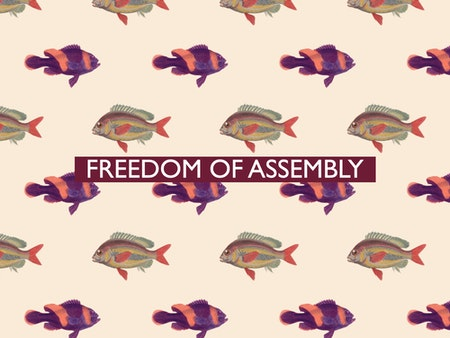 The 12th of all EU-r rights: freedom of assembly and how the Charter contributes
