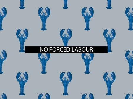 The 5th of all EU-r rights: no forced labour and how the Charter contributes