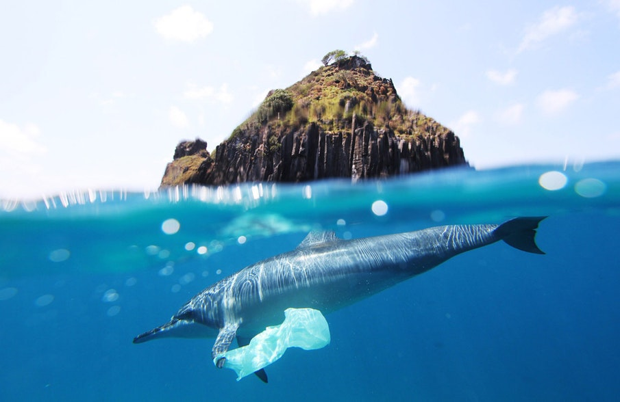 A European strategy to fight marine plastic pollution?