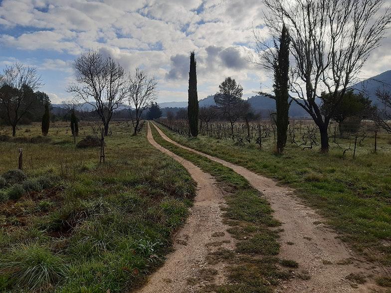 Über Naturwein: Nature Writing aus dem Weinfeld