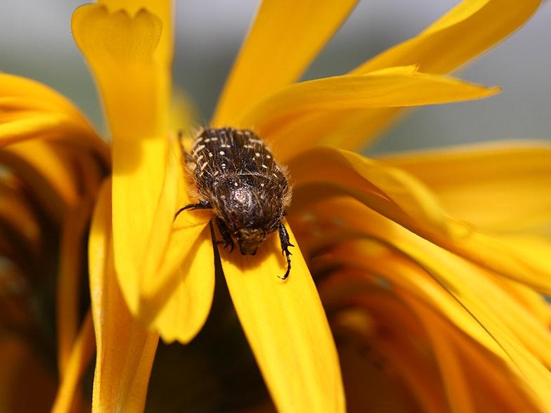 Fabre Thomas Streifeneder Insekten AgriCulture