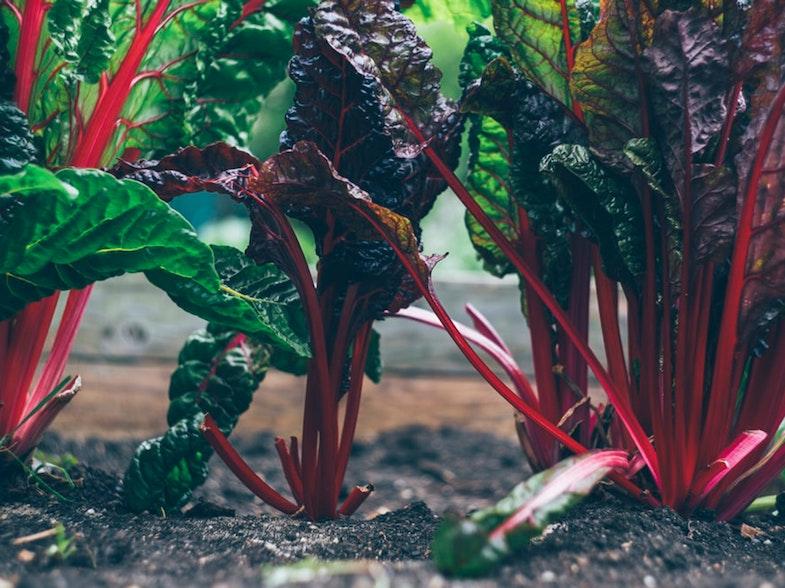 Orto Urbano Valentina Cattivelli AgriCulture Eurac Research Blogs