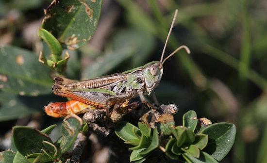 Kein trockenes Ödland, sondern essentiell für die Artenvielfalt