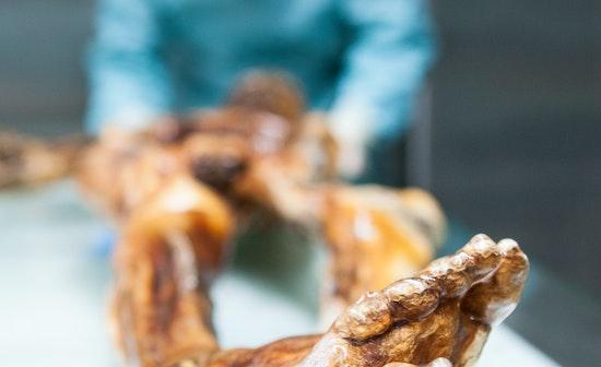 Lo stile di vita minaccia i batteri intestinali