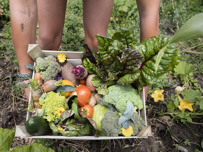 Frisch geerntetes Gemüse aus dem bäuerlichen Kleinbetrieb