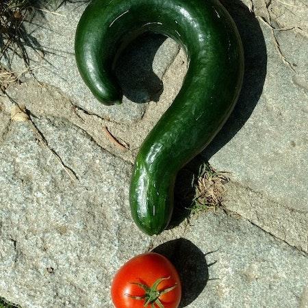 Vertane Chance: Biologische Landwirtschaft in Südtirol