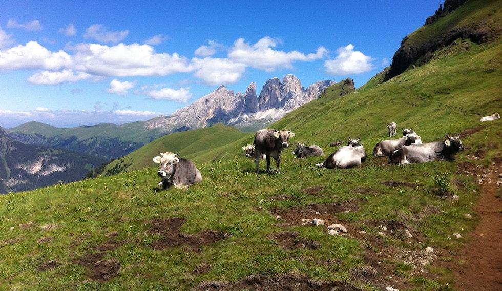 Erstes Symposium zur Viehwirtschaft im Berggebiet an der Eurac in Bozen