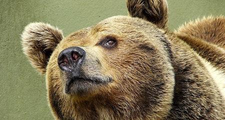 È sempre colpa dell'orso dannoso – Daniza è il suo nome